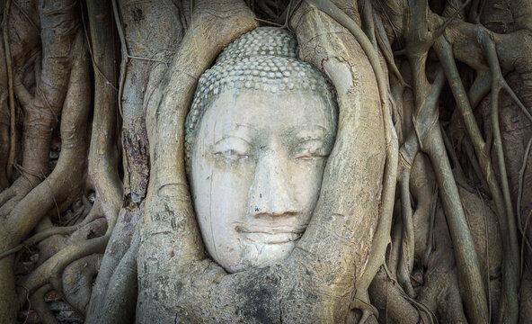 Head of Buddha statue in Wat Mahathat temple, Ayutthaya, Thailand.
