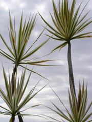 Canvas Prints Palm tree OLYMPUS DIGITAL CAMERA