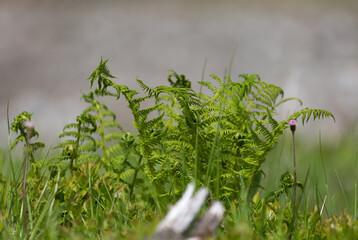 Grüne Pflanze im Makro.