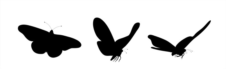 Set of vector silhouette of butterflies on white background. Symbol of insect.