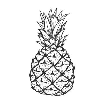 illustration of pineapple in engraving style. Design element for poster, label, sign, emblem, menu.
