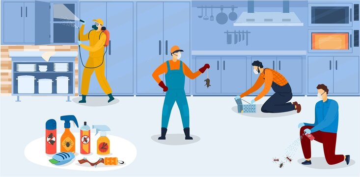Disinfection in kitchen, workers of pest control service in uniform sanitary processing of kitchen with insecticide chemical sprays vector illustration. Insects and rodents pest control exterminators.