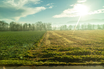 Wall Mural - Agricultural green fields and areas under bright sun in Austria country.