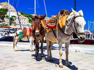 Traditional Greece - donkeys in Hydra island