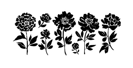Peony and anemones hand drawn paint vector set. Ink drawing flowers and plants, monochrome artistic botanical illustration.