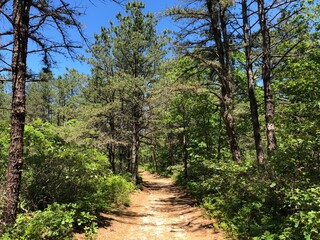 A Path Through the Forest at Brookhaven State Park on a Sunny Day in Wading River, Long Island, NY