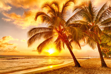 Beautiful vivid sunset over the coco palm in Barbados