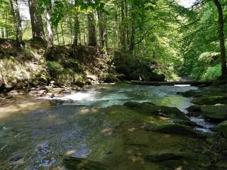 Photo sur Aluminium Rivière de la forêt stream in the forest