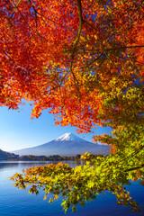 Wall Mural - Mountain fuji with red maple in Autumn, Kawaguchiko Lake, Japan