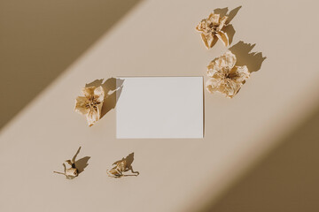 Blank paper sheet card with mockup copy space and dry flower buds with sunlight shadow on beige background. Minimal business brand template. Flat lay, top view