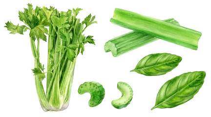 Set of frech celery with basil leaves watercolor illustration isolated on whitre background
