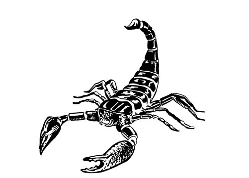 Graphical hand-drawn  scorpion isolated on white background,vector  illustration for tattoo ,design and printing