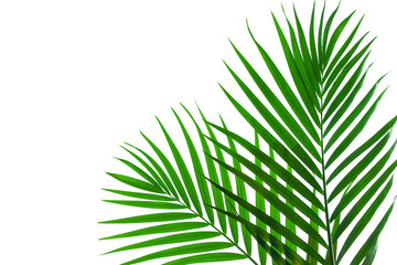 Foto auf AluDibond Palms tropical coconut palm leaf isolated on white background, summer background