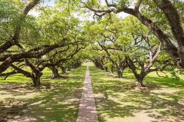 Oak Alley Plantation Park in Louisiana. Famous Because of the Slaves. Sightseeing Place. Mansion Backyard.