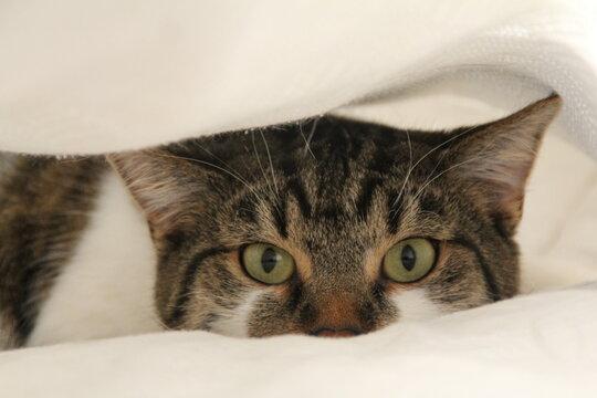 kot oczy felinus zwierzeta futro  siersc