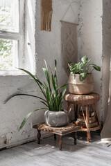 Two house plants in flower pots basket
