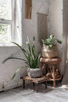 Two house plants in flower pots basket