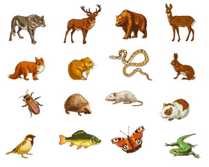 set of wild forest animals - color illustration on a white background