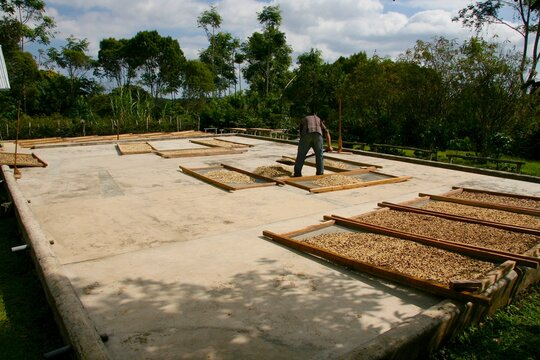 Coffee beans washing and drying procedure