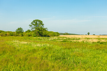 Narew Podlasie Podlaskie Narwiański Park Narodowy  Łąka trawa trzcina drzewa