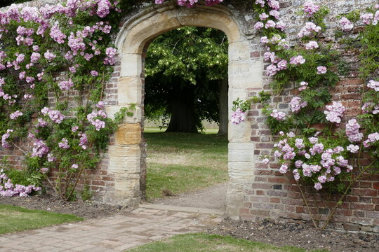 roses over a stone arch