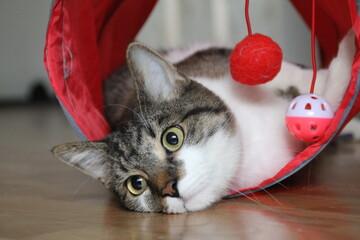 Obraz kot zwierzak oczy zabawka czerwony   - fototapety do salonu