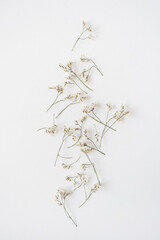 White wildflowers on white background. Flat lay, top view