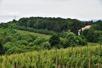 Foto op Canvas Ballon vineyard in the morning