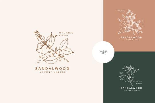 Vector illustration sandalwood branch - vintage engraved style. Logo composition in retro botanical style.
