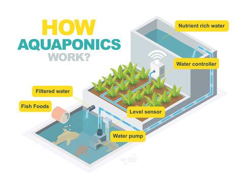 how aquaponics system work isometric