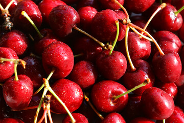 Fresh red cherries, fruits of the summer season