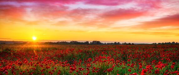 Beautiful poppy field during sunrise