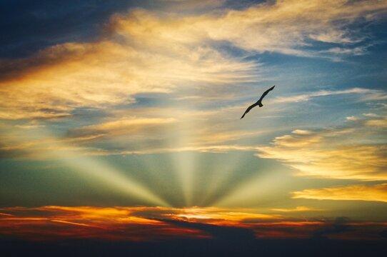 Beautiful sky with sun beams