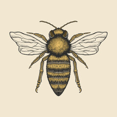 Hand drawing vintage bee vector illustration