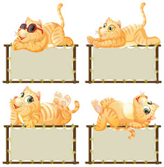 Board template with cute kitten on white background