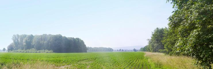 Sommer über weiter Landschaft in Niedersachsen, Panorama