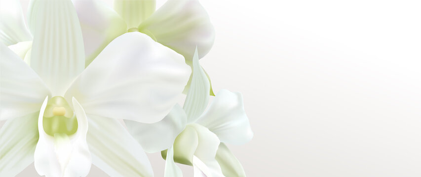 Gift certificate, Voucher with realistic white orchid flower bouquet. Blank background template useful for wedding design, 8 March invitation card or coupon, funeral thank you card