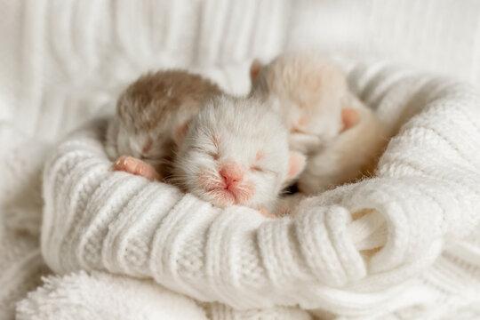 Newborn kittens sleep under a warm plaid