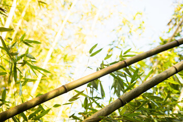 Abstract background with diagonal bamboo trees