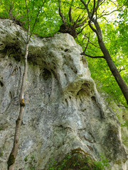 Limestone rocky formation at Pietrele Vorbitoare