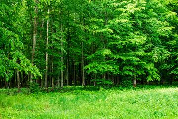 Białowieski Park Narodowy Białowieża Podlasie Drzewa las trawa natura