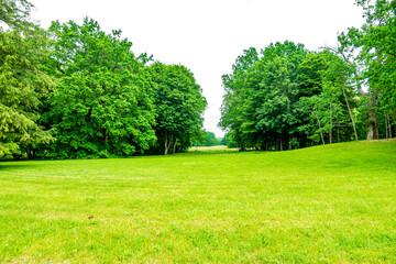 Białowieski Park Narodowy Białowieża Podlasie Drzewa park trawa rośliny las natura