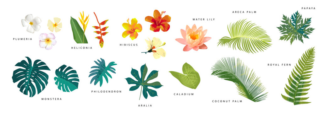 Set of vector realistic tropical leaves and flowers with names isolated on white background. Artistic botanical illustration