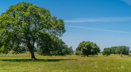 Foothills and Oak Trees-017