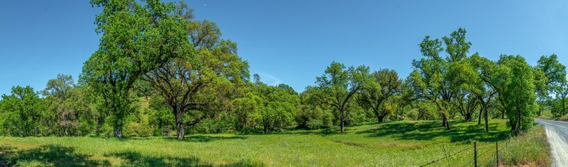 Foothills and Oak Trees-006