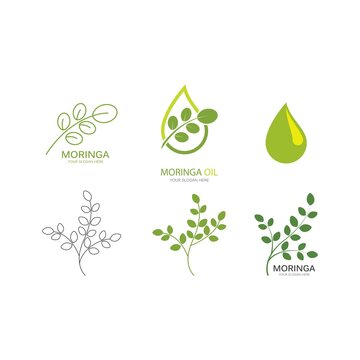 Moringa leaf illustration