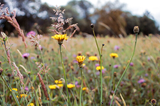 colorful flwers blooming in the grassland