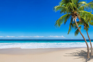 Paradise sunny beach with coco palms and turquoise sea. Summer vacation and tropical beach concept.
