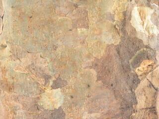 Fotobehang Oude vuile getextureerde muur Brown tree bark textured background