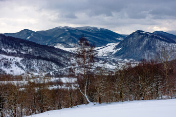 Wall Mural - cloudy winter morning in mountains. tree on snow covered field. carpathian rural landscape. village in the distant valley